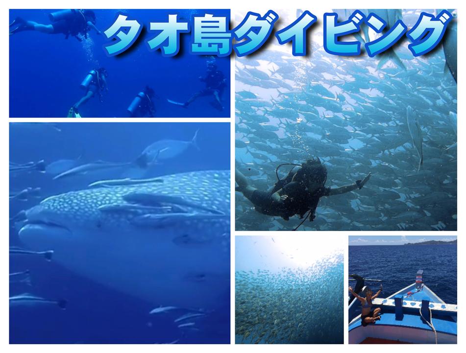 タオ島ダイビング-バンズダイビングリゾート-